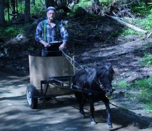 Balade en chariot romain, cheval, poney joering, ski-galop, traineau à cheval, traineau à chien, poney tremblant, Activité disponible