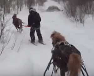Horse chariot Tours, Pony joering, Horse Sledding, Sleigh Ride, Ranch du cheval d'Or, Dogsledding, Mont-Tremblant, Laurentides, Activities Available