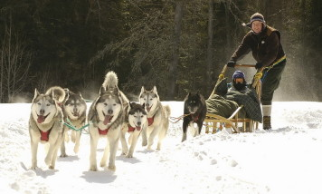 Traineau_a_chiens-Dogsledding-Balade_en_Carriole-Ranch-Expedition_Wolf