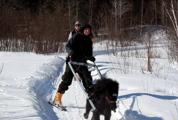 Pony Joering, Ranch du cheval d'Or, Sleigh rides, Horses sledding, Horse chariot tours