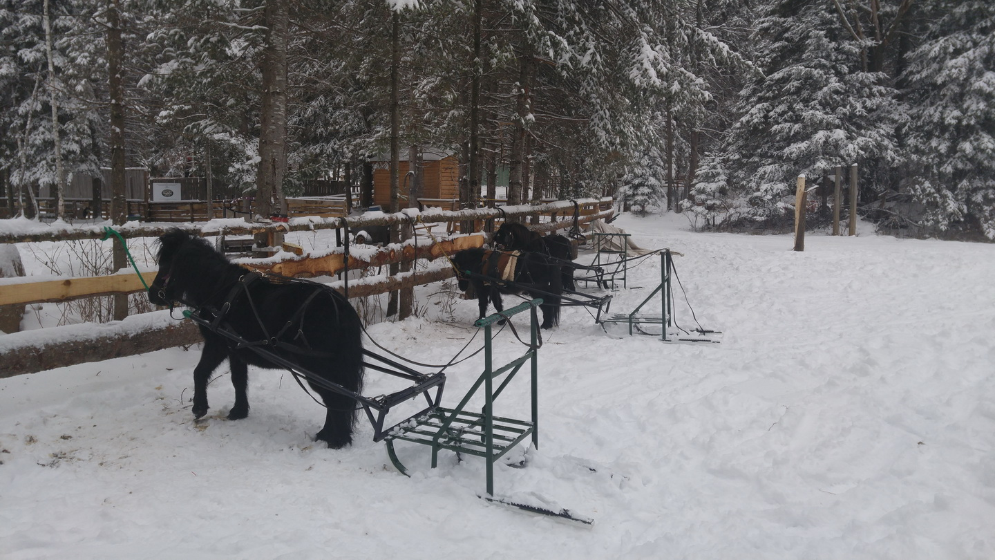 Horse-sledding-ranch