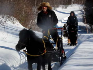 Balade en carriole, balade en chariot, cheval, poney joering, ski-galop, traineau à cheval, promenade en calèche, traineau à chien, Activité disponible